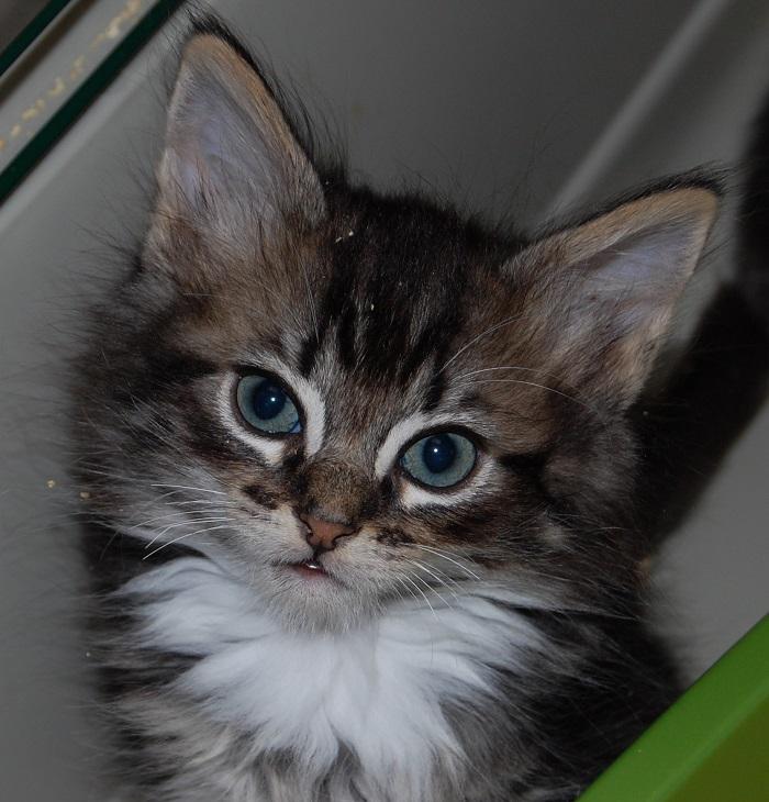 Cat Rescue Photos
