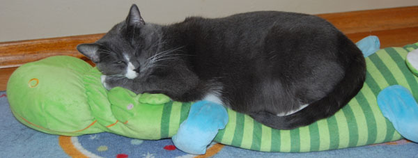 Me snoozing on my Ikea stuffed animal